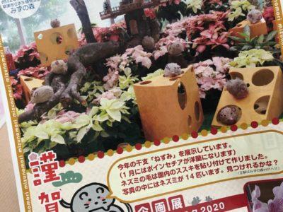 『草津市立水生植物公園みずの森』様のイベント広告~